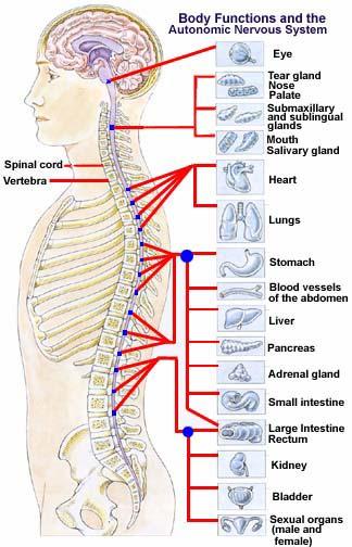 Que peut être fait mal dans les reins rend au dessous du ventre